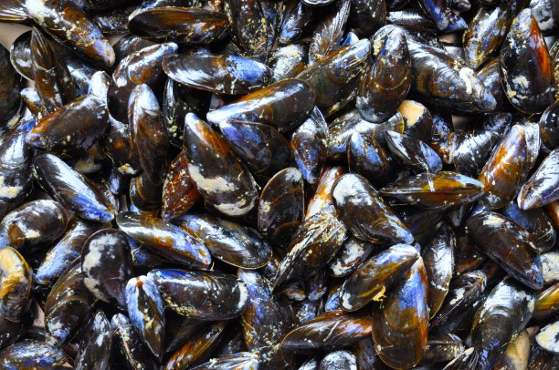 1 mussels